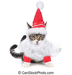 Unhappy Bah Humbug Santa Kitten Glaring at the Viewer - Mad...