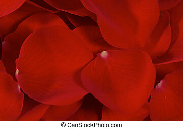 Rose Petals Overlapping - Multiple Rose Petals Overlapping...