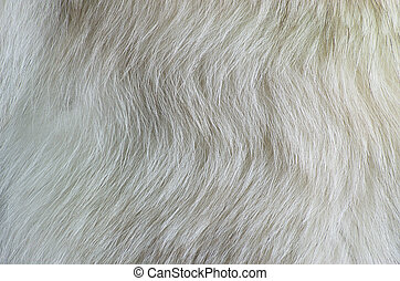 texture white fur polar fox