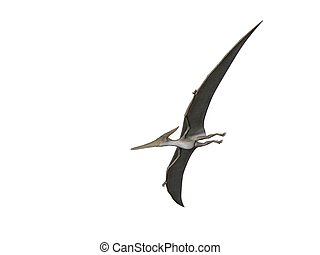 Pteranodon - Pterodactyl or Pteranodon flying isolated over...