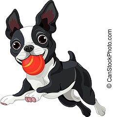 Boston Terrier Holds Ball - Illustration of Boston terrier...