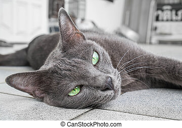 Grey cat stretch and looking at camera