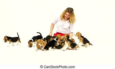 woman with cute beagle puppy on a white on studio. Slow...
