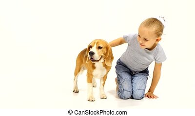 Beagle puppy with girl are posing in studio