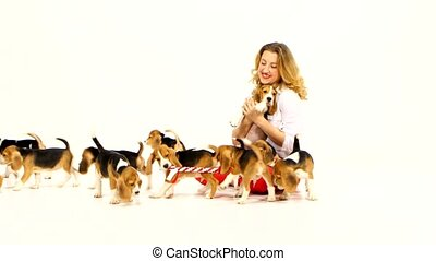 woman with cute beagle puppy on a white on studio - woman...