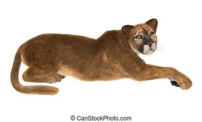 Puma - 3D digital render of a big cat puma resting isolated...