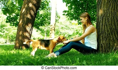 beagle puppy dog eating from hand in woman's arms