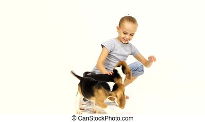 little girl played with Beagle puppy - little girl hugging...
