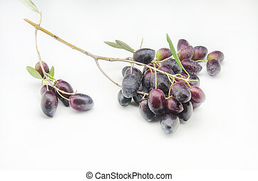 fresh olives - Freshly harvested fresh olives on white...