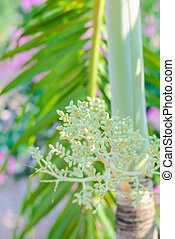 Sealing Wax Palm - Group of young fresh small fruits of...