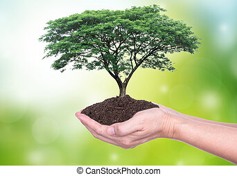 Growth - Human hands holding large trees growing in soil