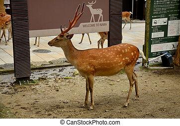 Deers at Todai-ji Temple in Nara Japan