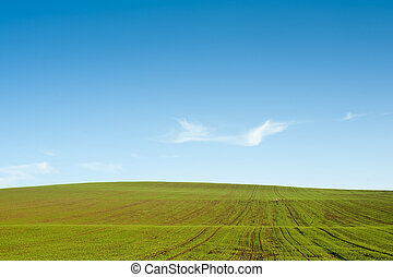 Gree field blue sky horizon - Horizon with green field and...