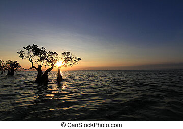 silhouette mangrove background sunset