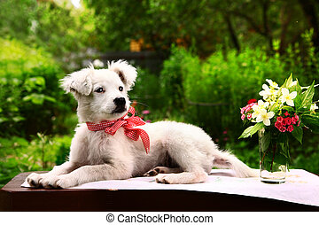 white puppy with vase of jasmin and carnation