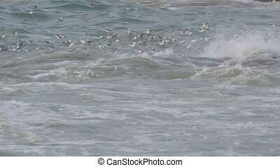 Gulls swimming in the ocean - Gulls swimming in the waves of...