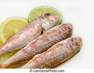 Fresh red mullet on white background