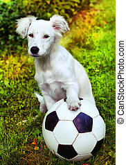 puppy with black and white ball