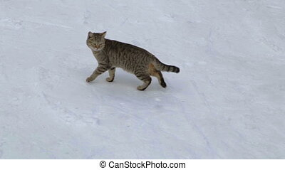 Cat on a winter walk in a mountains