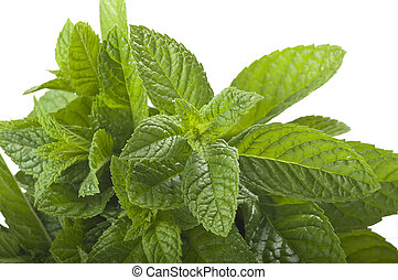 fresh mint  - bunch of fresh mint on the white