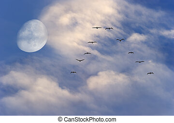 Moon Clouds Birds Flying - Moon clouds birds flying is a...