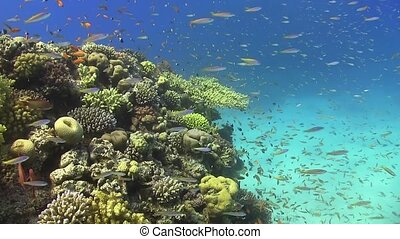 Tropical Fish on Vibrant Coral Reef, underwater scene