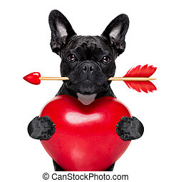 valentines arrow dog - valentines french bulldog dog in love...