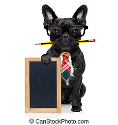 office worker dog - office businessman french bulldog dog...