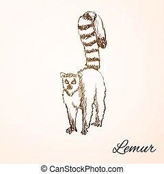 doodle lemur - Sketch Doodle Drawing lemur, excellent vector...