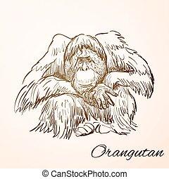 doodle orangutan - Sketch Doodle Drawing orangutan,...