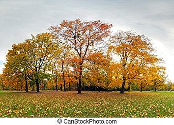 Autumn forest in park, Bratislava