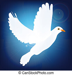 white pigeon on blue background - symbol of peace pigeon...