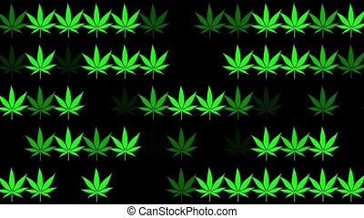 Green cannabis leaves in rows on black