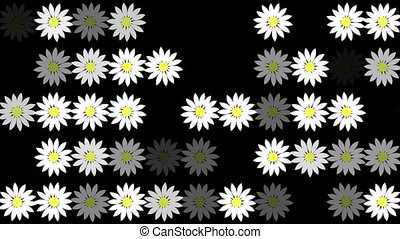 Abstract white flowers in rows