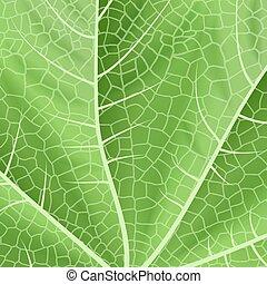 Green leaf texture - Illustration of green leaf background...