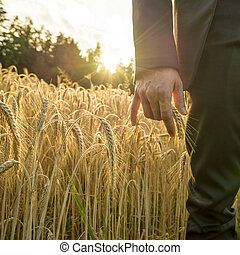 Front view of businessperson touching an ear of ripe golden wheat