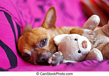 dog and peluche on a violet blanket