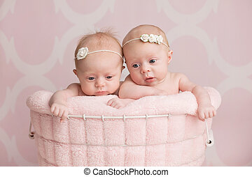 Twin Baby Girls Sitting in a Wire Basket - Seven week old,...