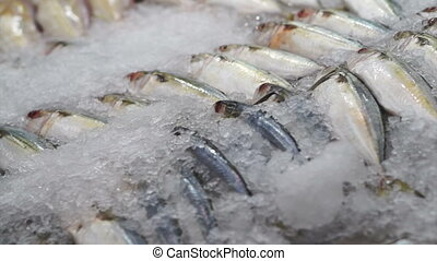 variety Fresh Fish on ice market - variety Fresh Fish at the...