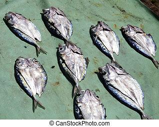 fish, állhatatos, aszalt