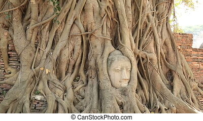 Buddha head in tree roots at ayutthaya ,Thailand