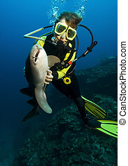 Diver with nurse shark - A woman diver hypnotizing a nurse...