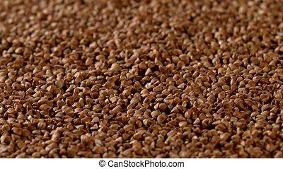 Buckwheat, background, rotation