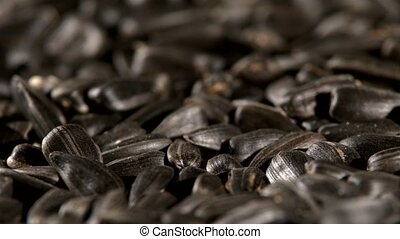 Sunflower seeds, rotation, close up, background - A lot of...