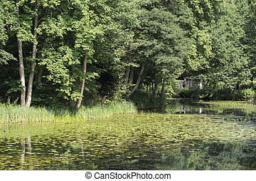 Lake with water lilies and a house in the background