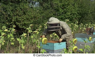 the beekeeper takes out a framework