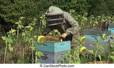 the beekeeper takes out a framework - Before checking the...