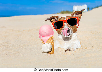 ice cream dog - jack russell dog licking ice cream with...