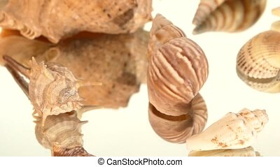 A lot of light brown sea shells on white, rotation,...