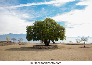 Monte Alban lonely tree and sky - Mexico Oaxaca Monte Alban...